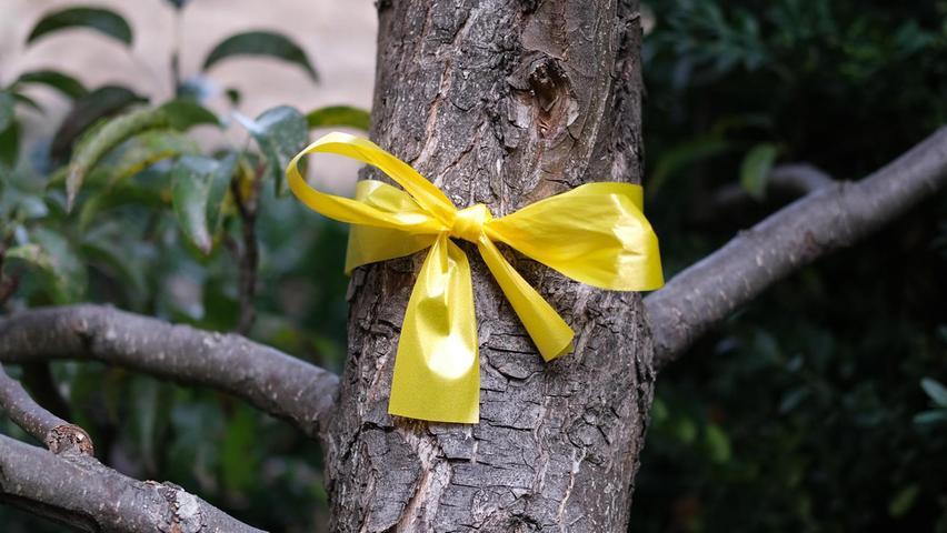 Versteckte Botschaft: Das bedeutet die gelbe Schleife an Bäumen