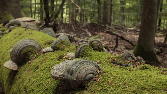Urwald für Franken: Großes neues Schutzgebiet