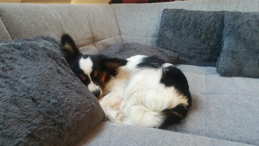 Phoebe hat endlich die perfekte Schlafposition gefunden.