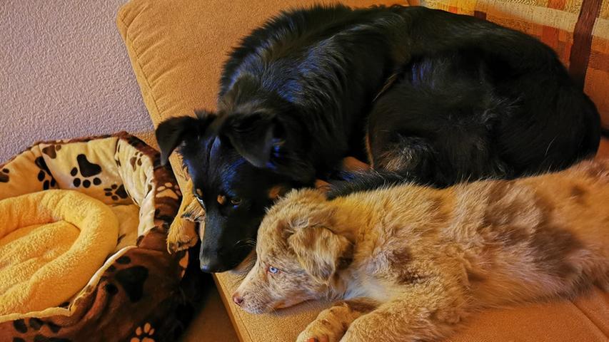Die beiden sehen aus, als würden sie gemeinsam einen Plan aushecken, wie sie an die leckeren Hundekekse kommen.