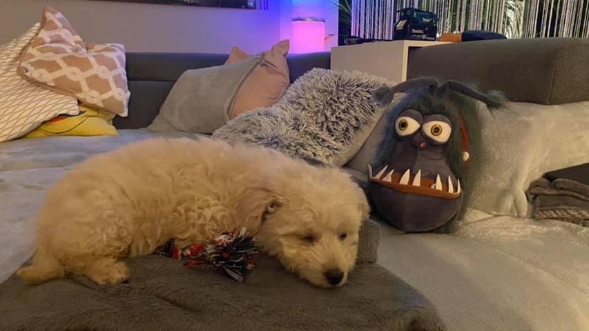 Um schlechte Träume abzuwenden, hat der süße Fratz einen kuschligen Beschützer neben sich liegen.