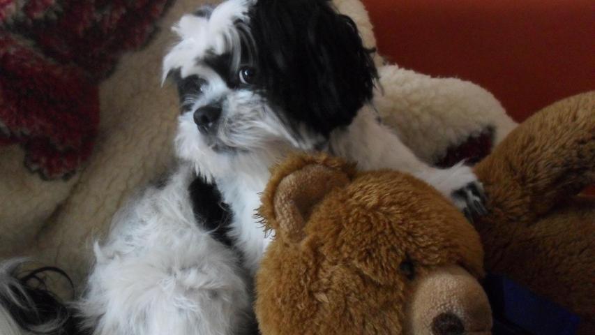 Brandy geht nicht ohne ihren Teddy ins Bett!