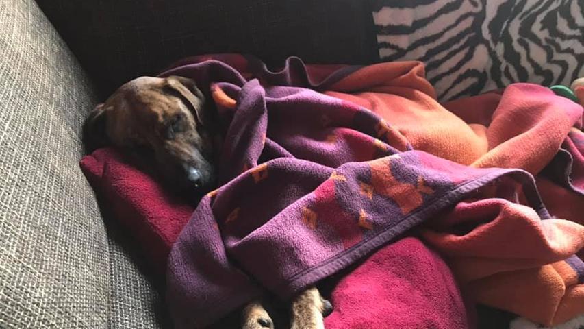 Die lila Decke liebt Barbosso über alles.