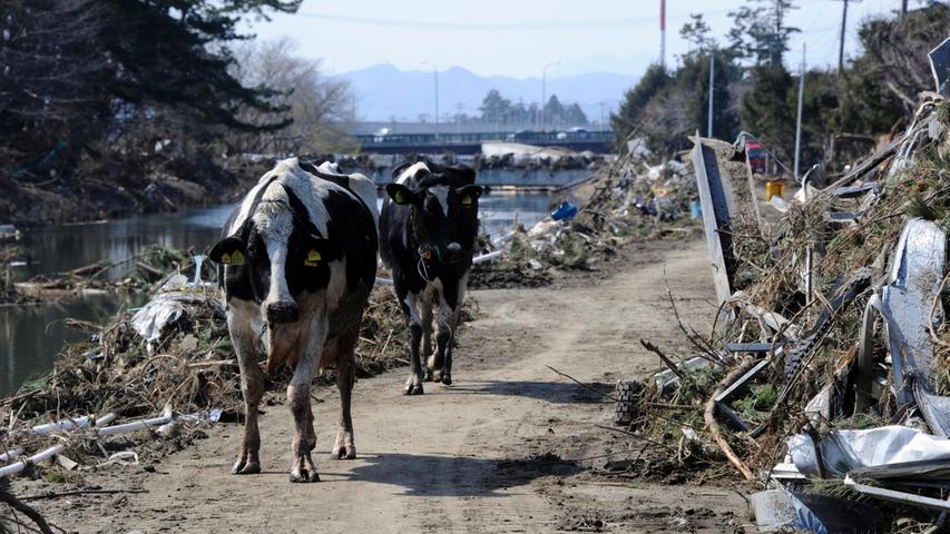 Fukushima: Die Chronik einer Katastrophe