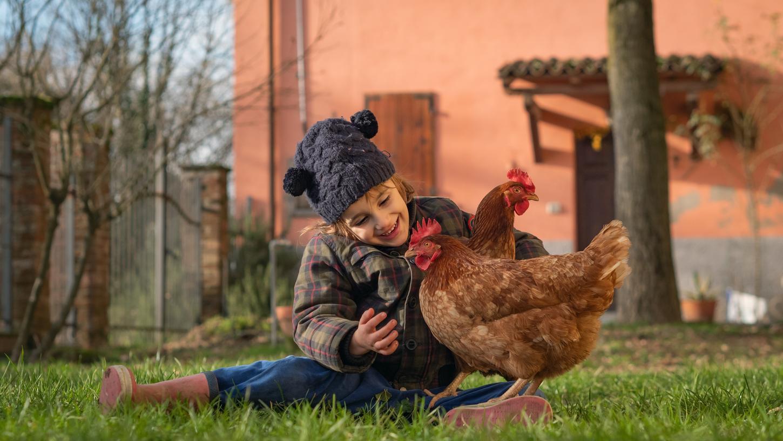 Ein Gehege mit Hahn und Hennen im eigenen Garten kann zu einer Wolfühloase für die ganze Familie werden.
