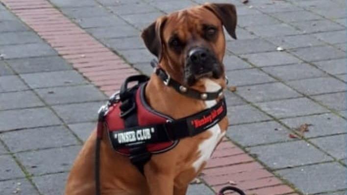 Hund Maxi Miniclubberer, seines Zeichens Maskottchen des 1.FC Nürnberg, unterstützt die Nürnberger Engel als Pate.