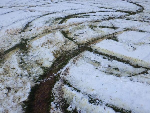 Die Grasnabe des Fußballplatzes wurde stellenweise völlig zerstört.
