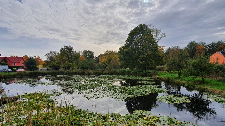 Mitten im Wohngebiet oberhalb der Geißäckerstraße in Burgfarrnbach liegt dieser Weiher, ein Biotop mit zahlreichen Amphibien.