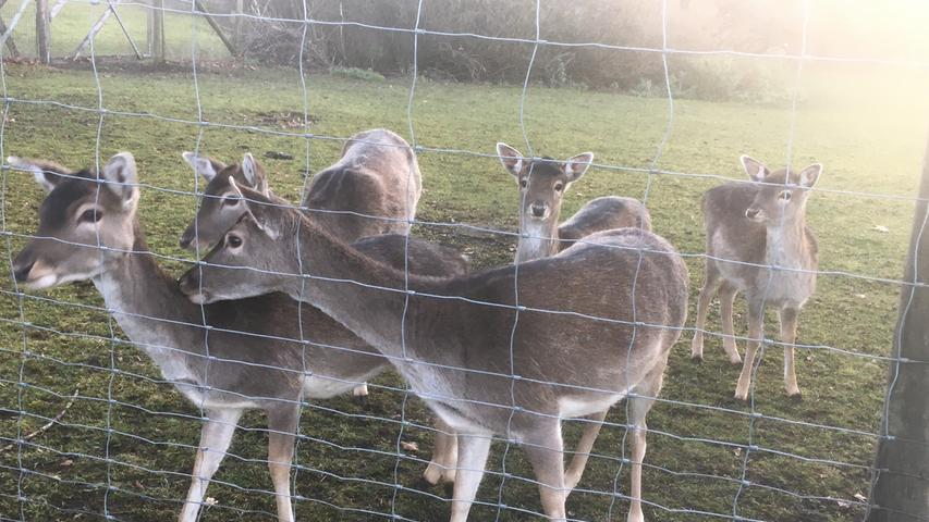 Tierische Unterhalter aus dem Kurpark