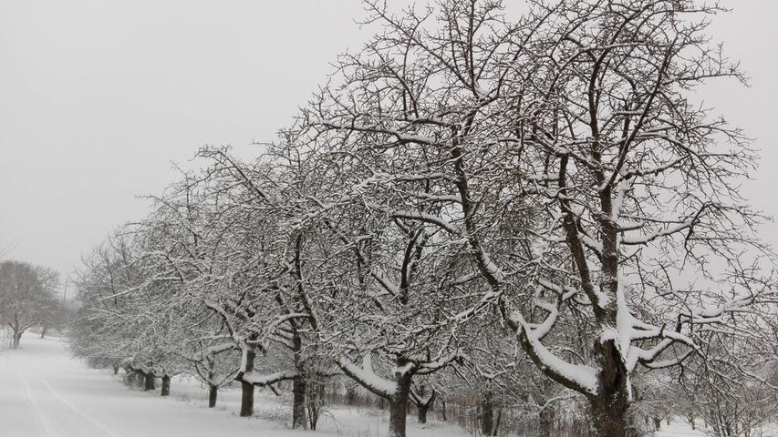 Schnee in Hetzelsdorf, Alte Obstanlage..12.01.21....Foto: Anna Wehrfritz