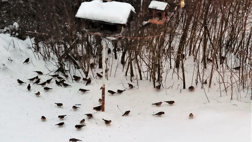 Schneebilder aus Gößweinstein..12.01.21....Foto: Thomas Weichert