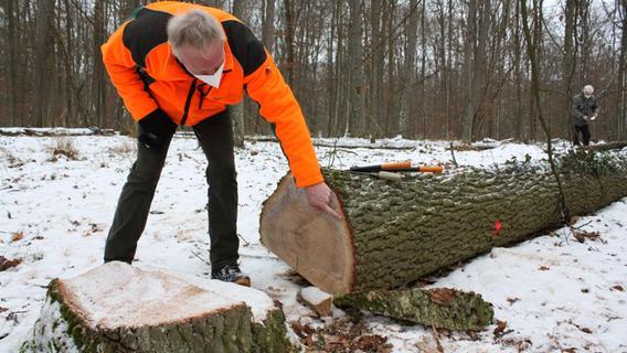 Gunzenhausen: Nach dem Schwammspinner kommt der Prachtkäfer