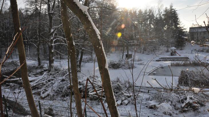 Auch wenn der Schnee es ein wenig versteckt, im Weißenbrunner Naturbad, vor allem im hinteren Bereich, mussten zahlreiche Erlen gefällt werden.
