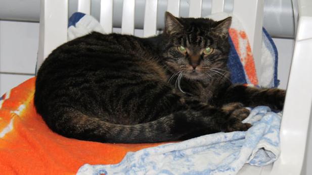 Katze Brigitta kommt aus Behringersmühle.