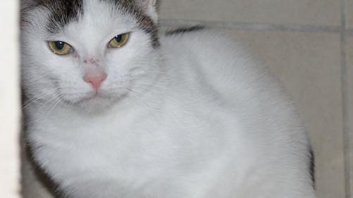 Olga ist eine junge Katze: Sie ist ein Dreivierteljahr alt und kommt aus Wiesenthau.