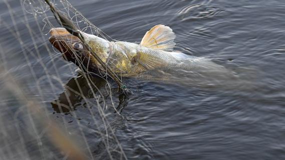 Fischsterben in der Schwabach sorgt für Aufregung