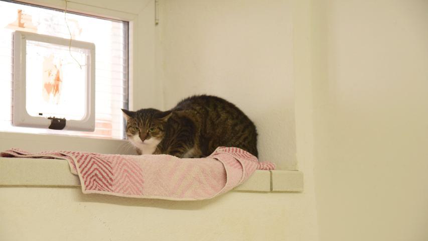 Abby ist noch mehr als ihre Zimmerfreundin Judy vorsichtig und zurückhaltend gegenüber dem Menschen. Sie ist im Jahr 2015 geboren und lebt seit dem 23. Dezember im Tierheim und wurde in Langenaltheim aufgefunden. Da sie eine extrem scheue Katze ist und Freigang liebt, ist sie als Hauskatze definitiv nicht geeignet. Die Pflegerinnen können sie sich später mal am ehesten auf einem Bauernhof vorstellen, wo Abby draußen lebt und möglichst viel Freiraum hat.