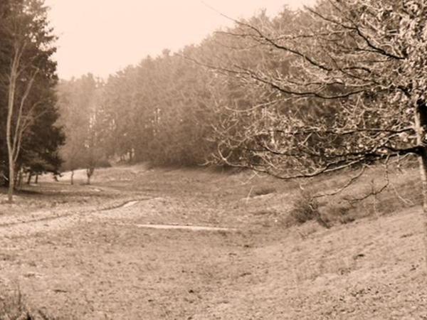 """Dieses alte Foto zeigt den in den 1950er Jahren noch kaum zugewachsenen und nur wenig Wasser führenden nördlichen Teil des Karlsgrabens. """"Dieses Gebiet was botanisch recht interessant, und es hatten sich in dem kleinen Bach allerhand Tiere wie Molche und Kröten angesiedelt"""", erinnert sich Gudrun Moritz an diese Zeit."""