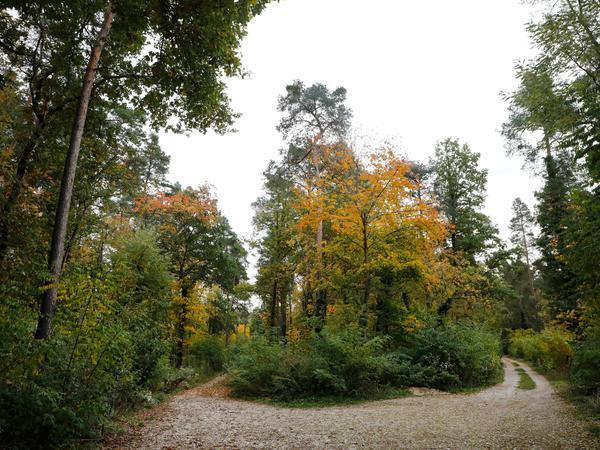 Der Wald bei Altenfurt ist ein beliebtes Erholungsgebiet der Bürger. Dementsprechend heftig protestieren die Anwohner gegen die mögliche Zerstörung.