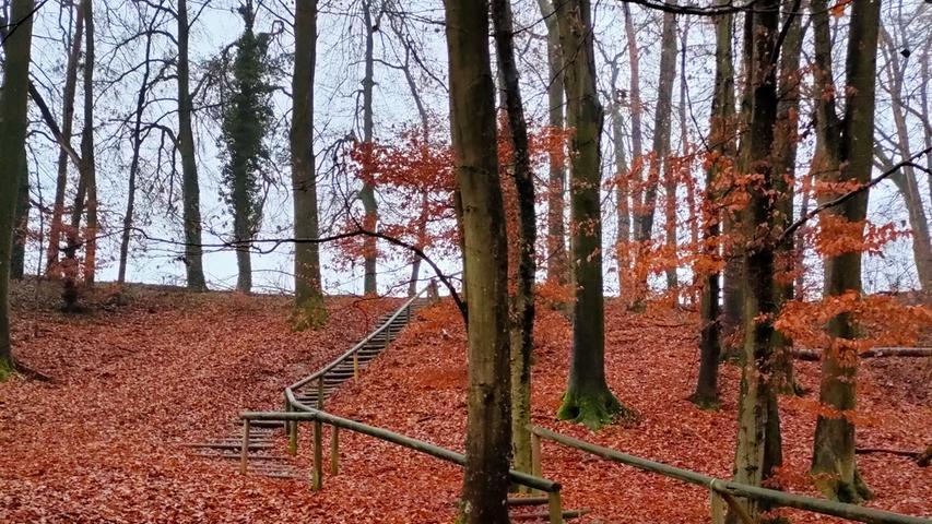 So entspannend sind unsere fränkischen Wälder