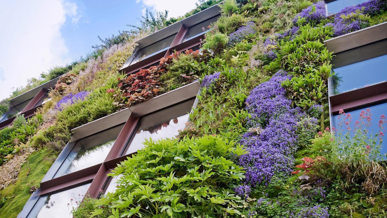 Bunte Fassaden aus Grün sorgen für ein besseres Mikroklima in der Stadt. Forchheim zeigt sich offen, dem Beispiel zu folgen.