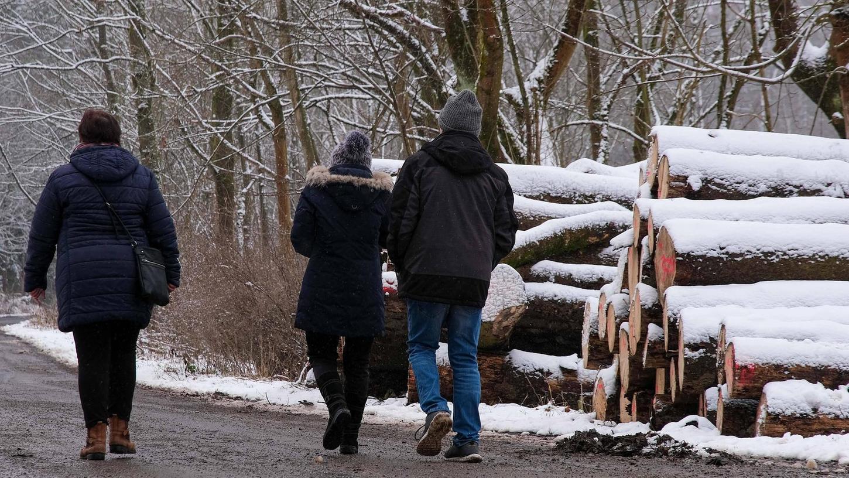 Beim Spazieren im Wald sollte man unbedingt auf den Wegen bleiben, nicht nachts oder in der Dämmerung unterwegs sein und seinen Hund stets anleinen.