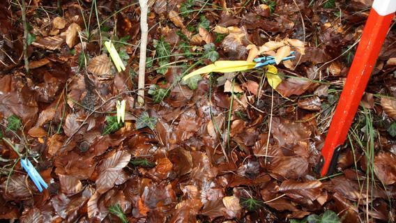 Rund um den Fluchtstab werden an den Aufnahmepunkten die Jungpflanzen mit Klammern markiert.