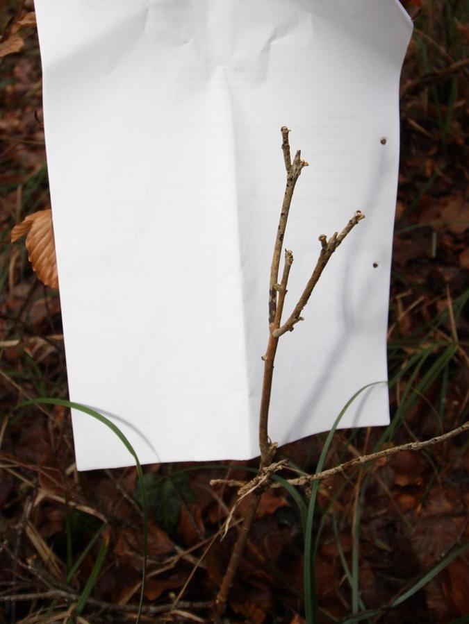 Die Zahl der verbissenen Pflanzen wie diese soll durch das Gutachten reduziert werden, dient es doch als Grundlage für die Wild-Abschusspläne.