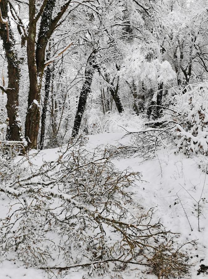 Vorsicht beim Spazierengehen: Schneebruch am Treuchtlinger Perlachberg.