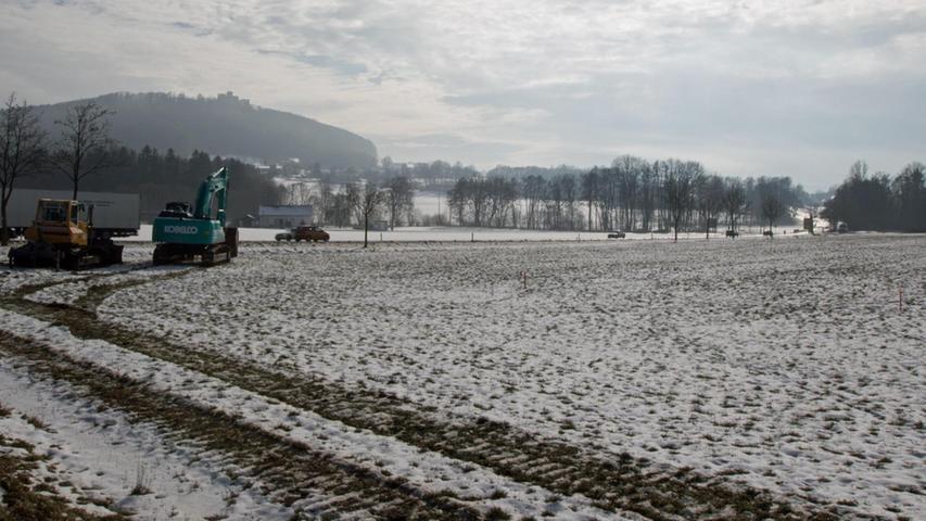 Fuchs Europoles zieht in Neumarkt auf die grüne Wiese