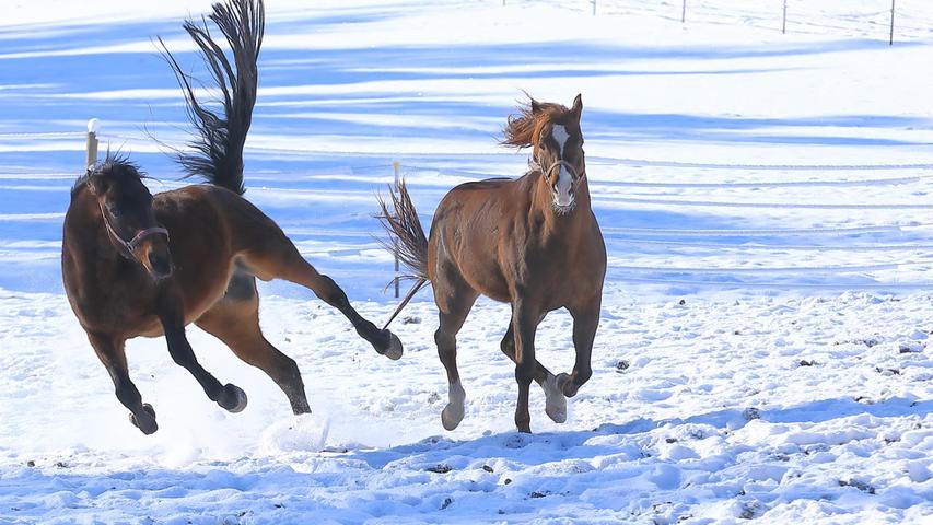 Die jungen Wilden genießen den Schnee, dass er aufstaubt. Gesehen bei Feuchtwangen.