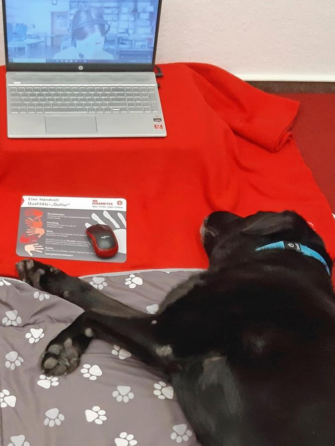 Die Lesehunde Benny, Enzo, Luc und Monty sind jetzt online im Einsatz, um ihre Lesekinder zu unterstützen.