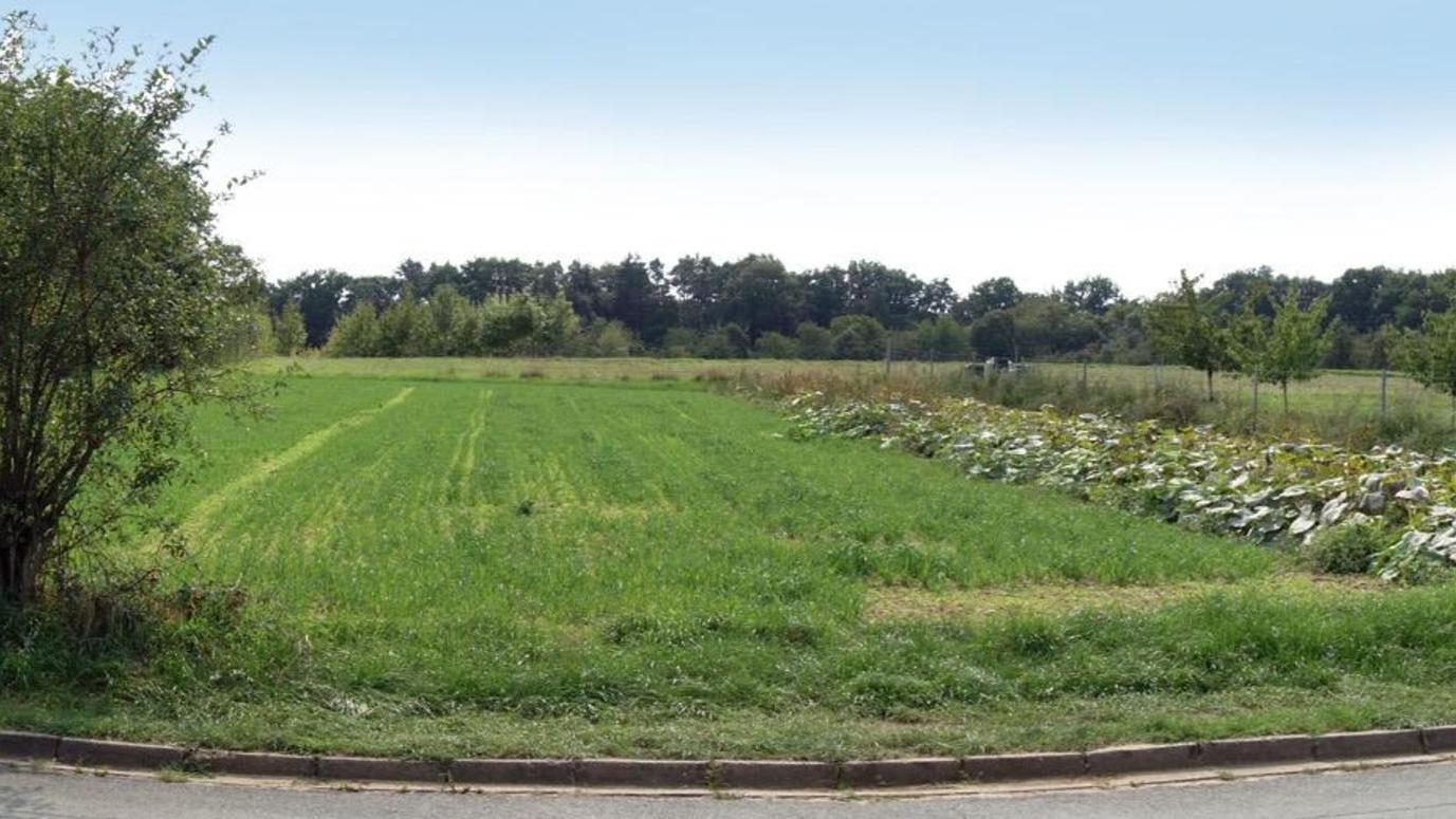 Hier könnten knapp über ein Dutzend neue Häuser entstehen, wenn die Gemeinde das Baugebiet weiter planen darf.