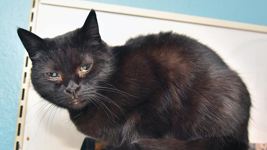 """""""Lena"""" ist wirklich ein Langzeit-Gast im Tierheim. Geboren wurde sie vermutlich 2007. Gut die Hälfte ihres Lebens hat sie bei uns verbracht. Der Grund dafür ist, dass Lena eine etwas """"spezielle"""" Katze ist: Wer sich für sie interessiert, sollte auf jeden Fall über Katzenerfahrung verfügen. Lena sucht sich die Menschen aus, zu denen sie Vertrauen fasst. Da Lena ursprünglich als Fundkatze ins Tierheim gekommen ist, wissen wir leider nichts über ihre Vorgeschichte."""