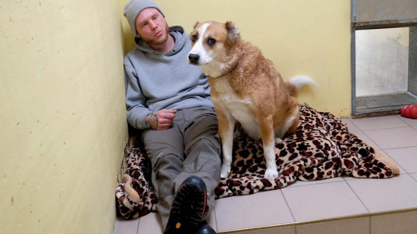 Nach Hundeboom: Nürnberger Tierheim befürchtet Rückgabewelle