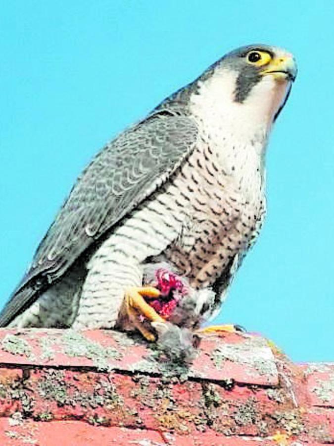 """Den Vogel, den Ella in den Fängen hält, hat ihr Harold als """"Brautgeschenk"""" gebracht."""