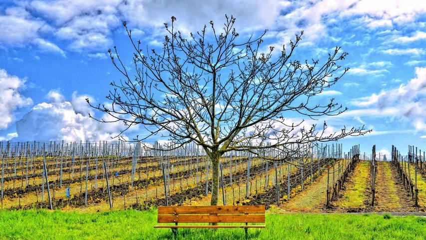 Noch spendet der Baum dieser Bank im Steigerwald keinen Schatten - so lässt sich die Frühlingssonne genießen.