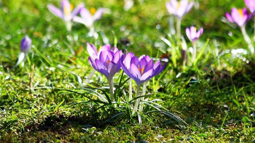 Meteorologisch startet der Frühling immer am 1. März. Denn die vier Jahreszeiten sind unabhängig vom Wetter in drei Monate eingeteilt. Der Frühling geht von März bis Mai. Kalendarisch geht der Frühling jedes Jahr an einem anderen Tag, abhängig davon, wann die Sonne senkrecht über dem Äquator steht. 2021 beginnt der Frühling am 20. März.