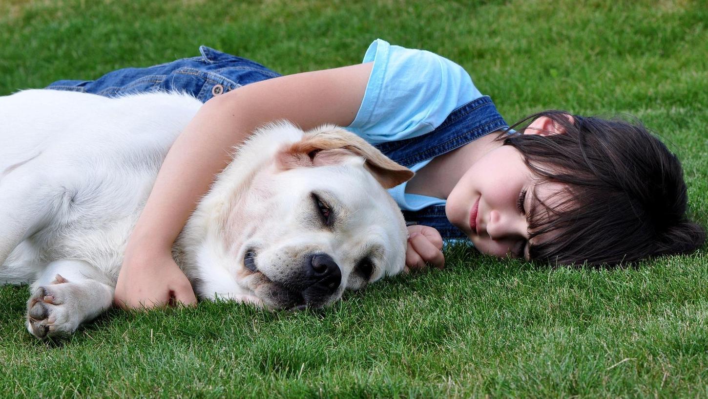 """Ob dieses Kind weiß, dass es gerade Oxytocin ausschüttet? Wir Menschen berühren gerne die Haut von Menschen oder ein weiches Fell, das ist in uns angelegt. Die Psychologin Andrea Beetz weist aber darauf hin: """"Der Hund muss das genießen, wir dürfen ihn nicht zwangsbespaßen. Beim Hund sollte sich derselbe Effekt einstellen wie bei uns."""""""