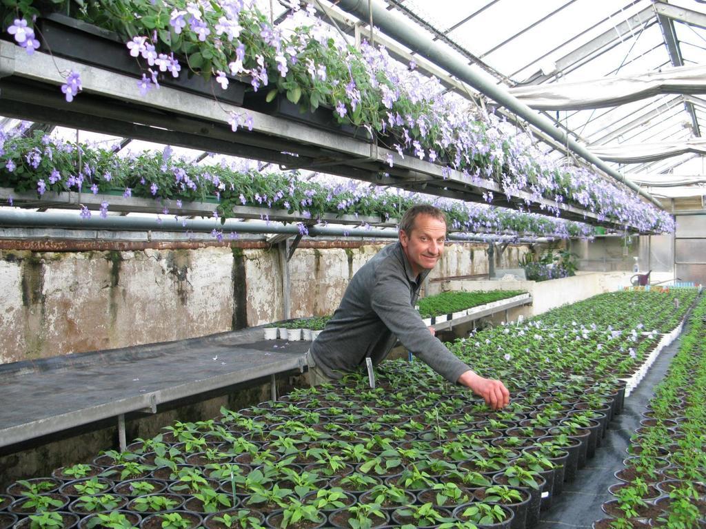 Peter Gauch von der gleichnamigen Herzogenauracher Gärtnerei freut sich: Ab Montag darf er endlich wieder aufsperren. Hier kümmert er sich schon um die Sommerblumen.