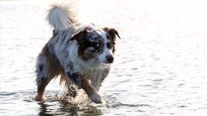 Vierbeiner in der Sonne: Die schönsten Hunde-Bilder unserer User