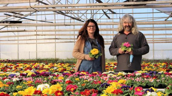 Gärtnereien wieder geöffnet: Viele Frühlingsboten warten auf Abholung