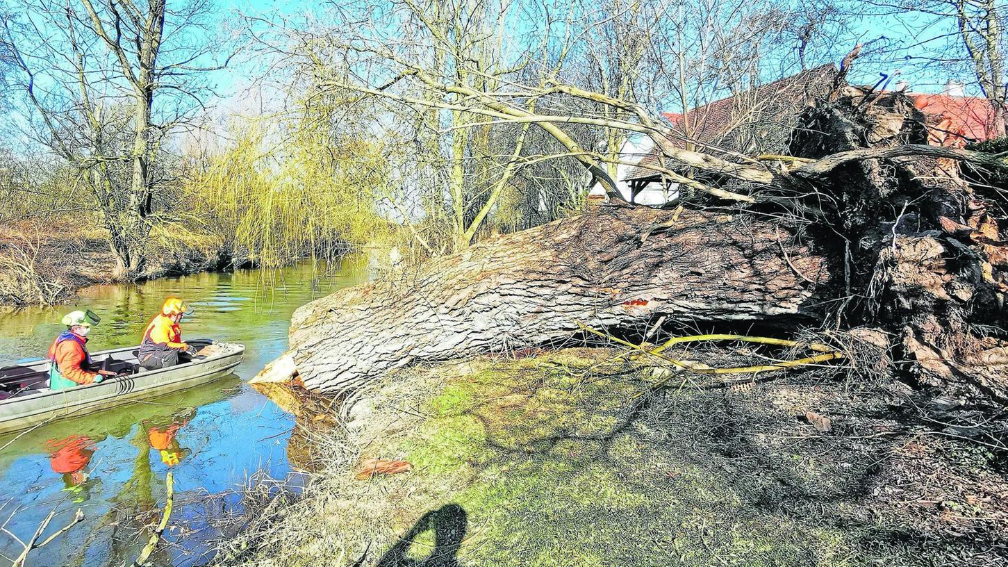 Neben dem mächtigen Fuß der alten Weide am Altmühlufer in Bubenheim wirkt das Boot des Wasserwirtschaftsamtes ziemlich klein.