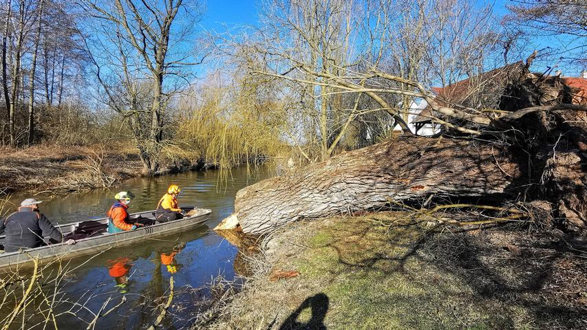 Eine der alten Weiden im Treuchtlinger Ortsteil Bubenheim hat im Februar unter der Schneelast nachgegeben und ist quer über den Fluss gestürzt. Nun machten sich Stadtbauhof, Wasserwirtschaftsamt und Bürger gemeinsam ans Aufräumen.