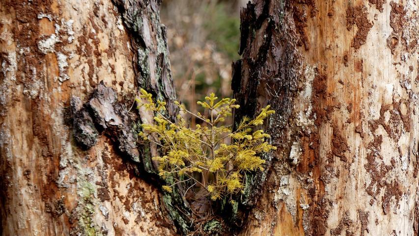 Erich Kraus, Februar 2021 Schmuckbilder Ende Winter warme Tage Seenland Wald Baum Kinderstube
