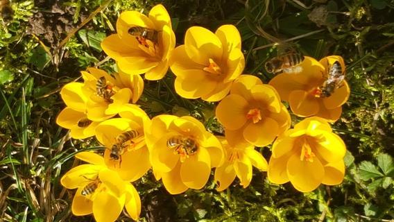 Frühlingserwachen in und um Gunzenhausen: Natur zeigt sich in prächtigen Farben
