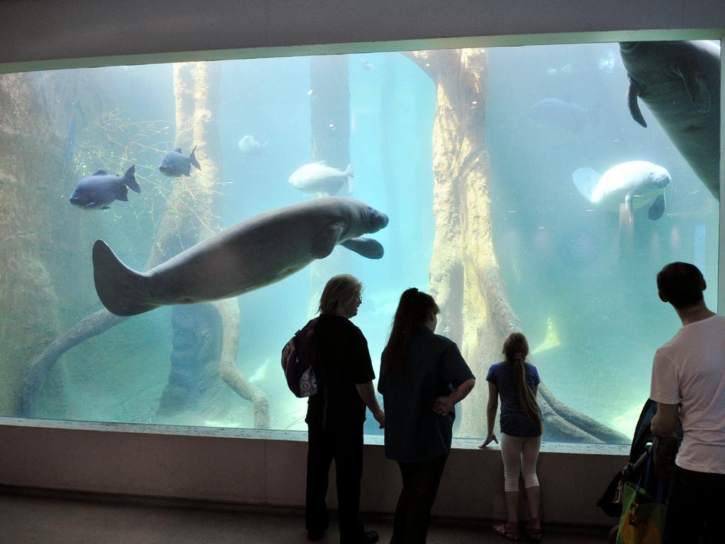 Tiergarten: im Manatihaus Foto: Hagen Gerullis 20120427 Blauer Salon; Glasscheibe; Besucher; Tier; Manati; Seekuh;