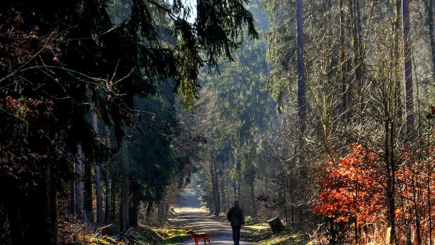 Ein Waldwegbei Rednitzhembach