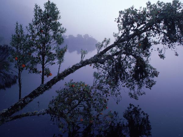 Regenwald in den Ruwenzori Mountains in Uganda.