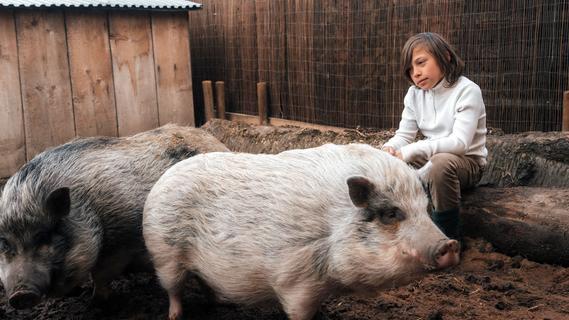 Neues Zuhause für Tierheim-Schweine: Milli und Vanilli leben jetzt auf Gnadenhof